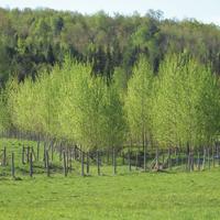 bande riveraine dans un champ agricole