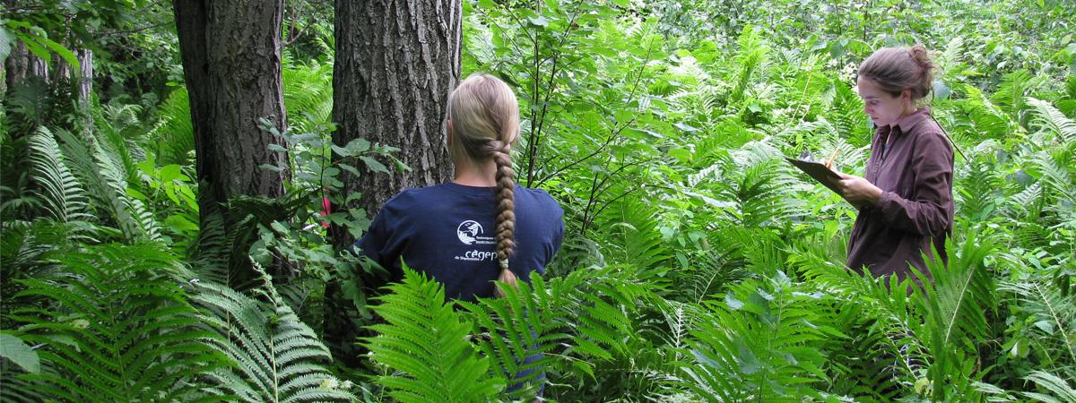 Conservation de la forêt