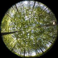 Ouverture du couvert forestier