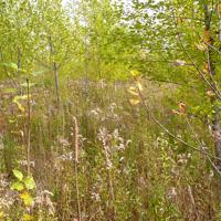 Arbres plantés en friche agricole
