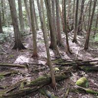 zonage forestier sud du Québec