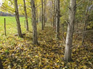 Production de bois et de biomasse