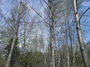 Enrichissement d'une forêt dégradée
