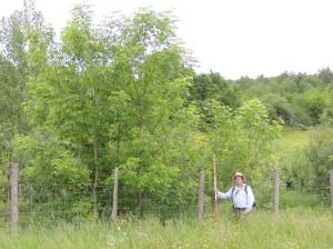 Bandes d'arbres multi-espèces en zone riveraine agricole