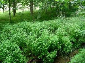Services écosystémiques avec les bandes riveraines